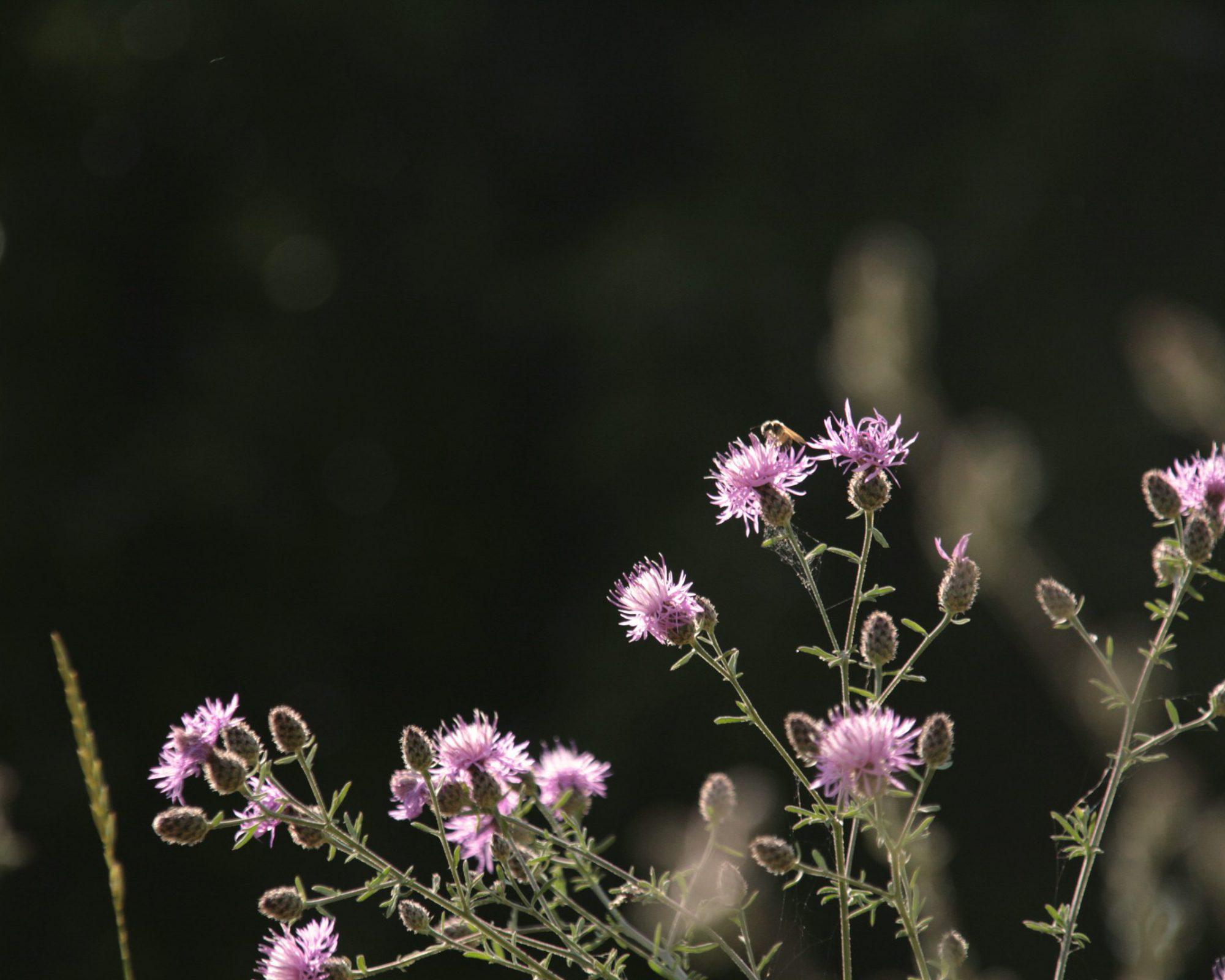 Pflanzen-Impressionen