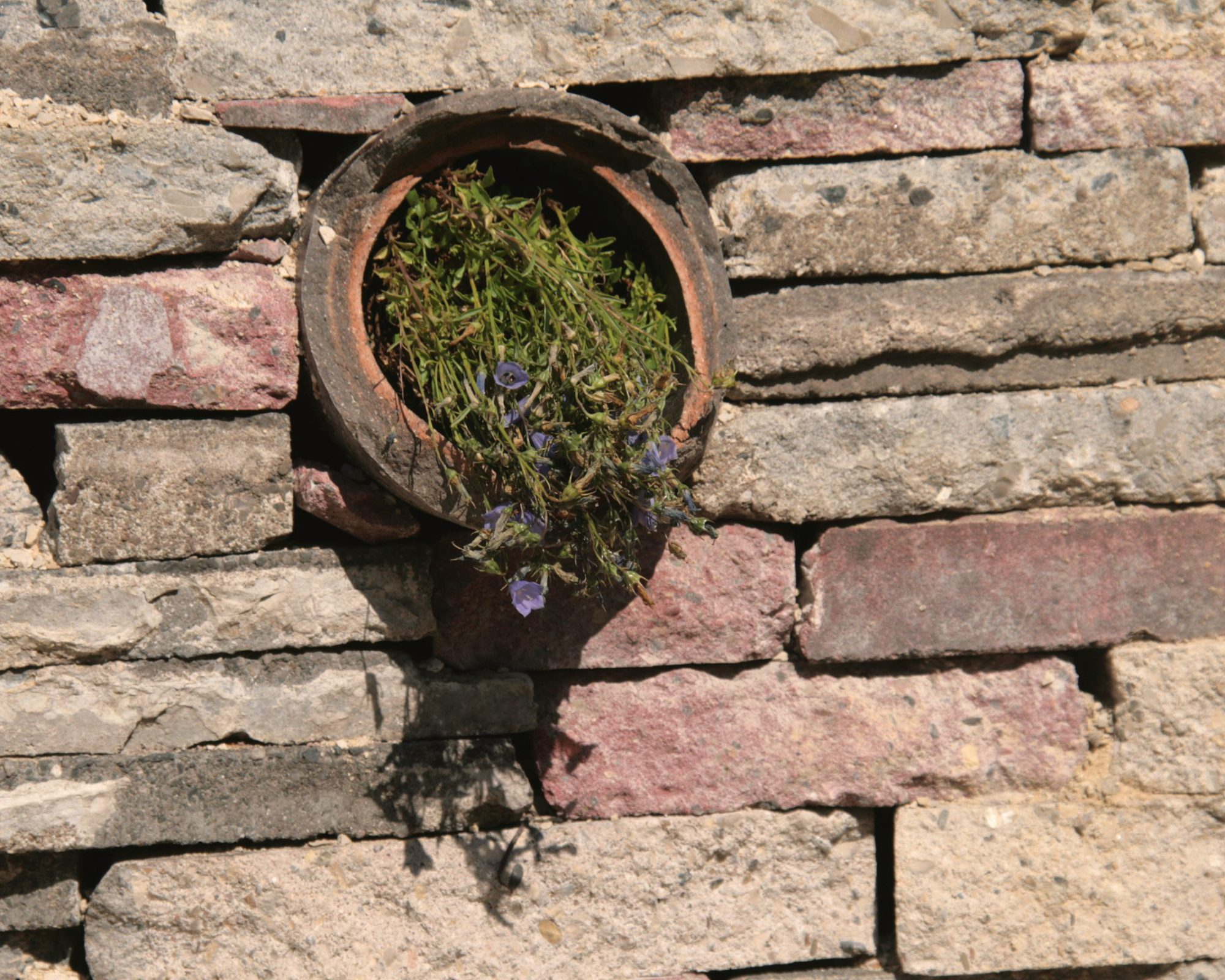 Trockenmauer mit Pflanzung